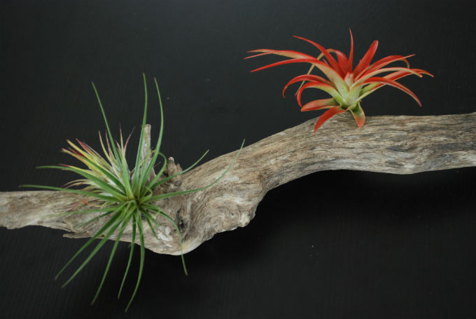 Plants on Things 4